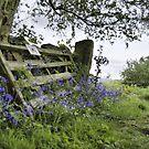 Bow Wood: Derbyshire by LazloWoodbine