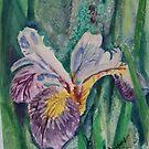 Iris in  Bloom by Diane Rodriguez