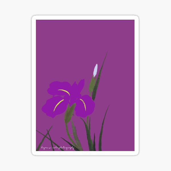 Purple Iris Poetry Sticker
