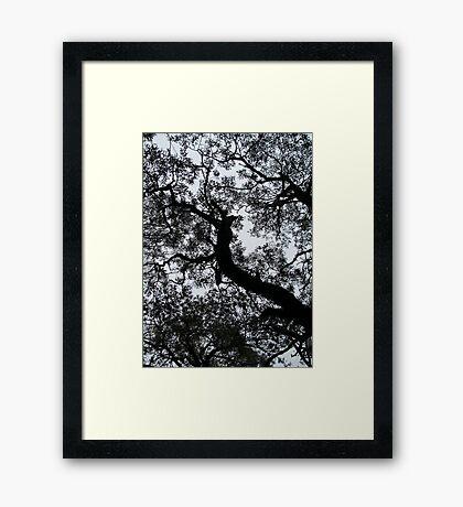 A Walk in the Clouds #5 Framed Print