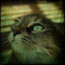Angel Eyes by jodi payne