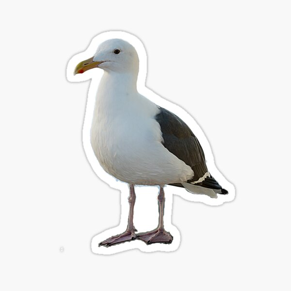 Disapproving Gull Sticker
