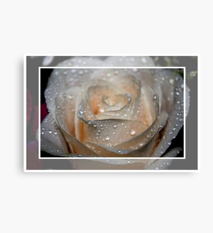 Raindrops and the Rose Canvas Print