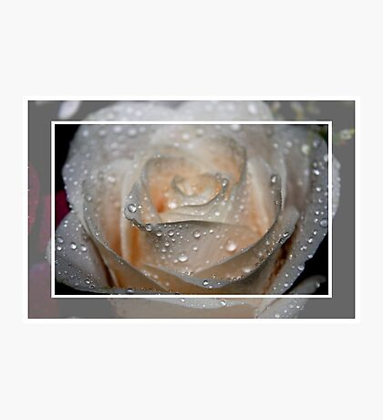 Raindrops and the Rose Photographic Print