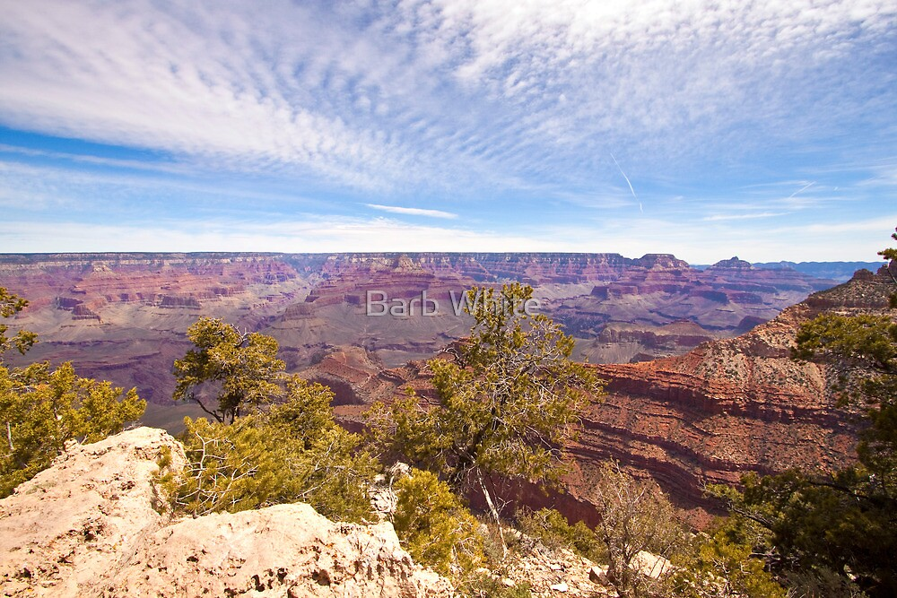 Grand Canyon National Park by Barb White