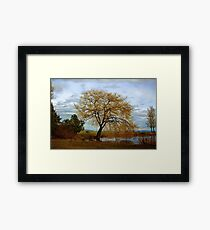 A Day at the Park Framed Print