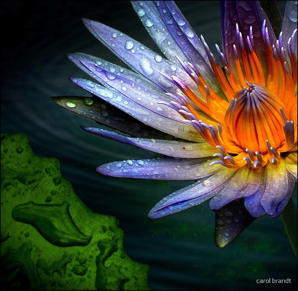 waterlily by carol brandt