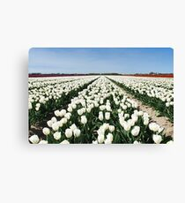 Tulips, as far as you can see..... Canvas Print