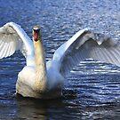 Majestic Water Bird by Barbara Caffell