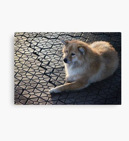 Early morning dog - Mekong Delta, Vietnam Canvas Print