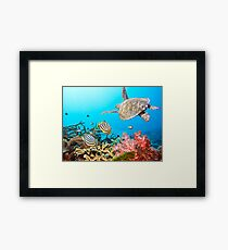 Butterflyfishes and turtle Framed Print