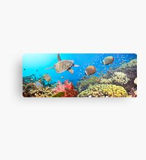 Underwater panorama Canvas Print