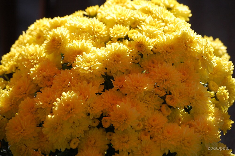Mums for the Moms!! by zpawpaw