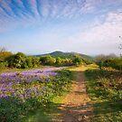 Malvern Hills : Midsummer Bluebells 2 by Angie Latham
