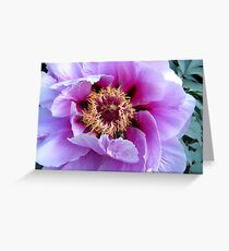 Tree Peony Greeting Card
