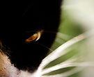 feline by Ingrid Beddoes