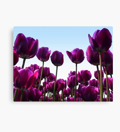 Purple reach the sky Canvas Print