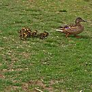 Make Way For The Ducklings! by Lee d'Entremont
