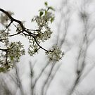 emergence of spring by leapdaybride