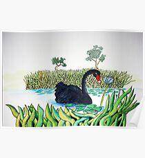Black Swan and Lotus Poster