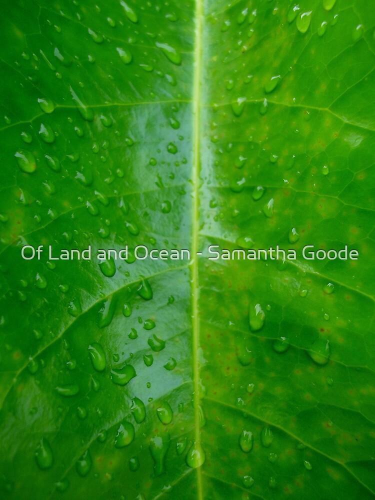 Raindrops by Of Land & Ocean - Samantha Goode