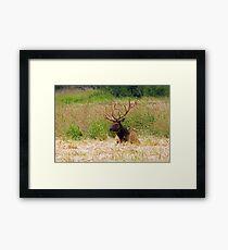 Bull Elk at Rest Framed Print