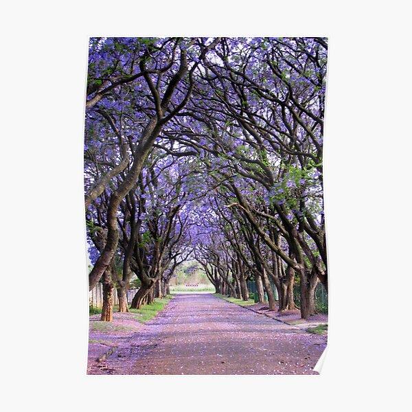 It is purple in Cullinan Poster