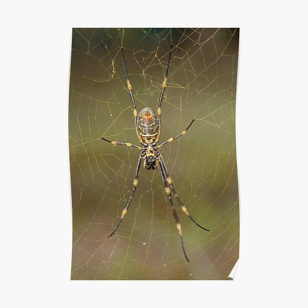 Golden Orb Weaver - Nephila sp. Poster