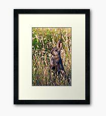 Brown Bunny Framed Print