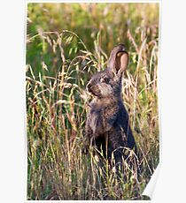 Brown Bunny Poster