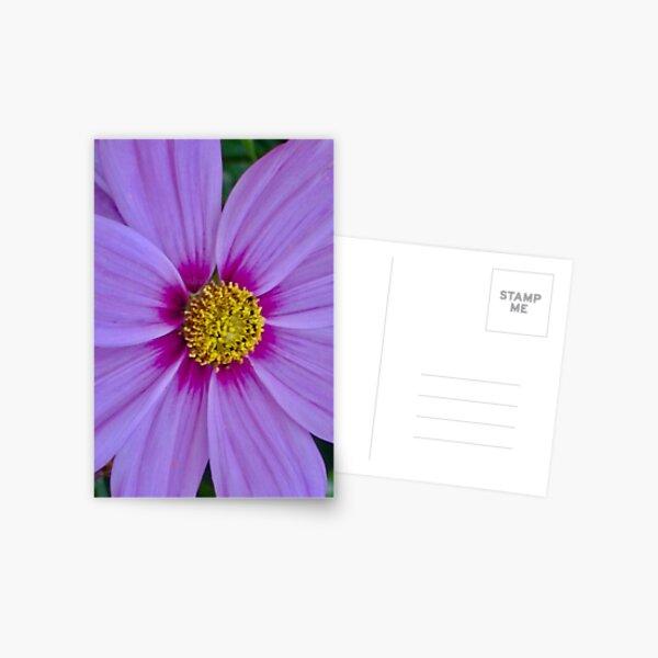 Purple flower design  Postcard