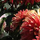 Dahlias by psphotogallery