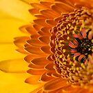 Little Bit Sunshine by Lynne Morris