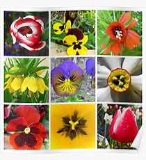 Spring Flower Collection  Poster