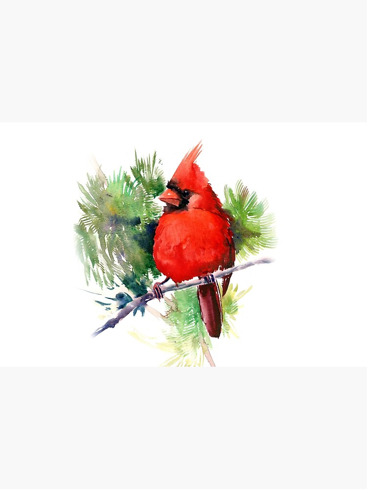 Red Cardinal Bird by surenart