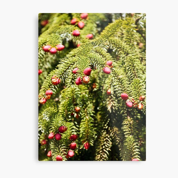 The Forest Blooms Metal Print