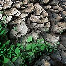 Brisbane Floods Of 2011 - Mud - Signs Of Life by Neil Ross
