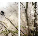 Spring Diptych by Mary Ann Reilly
