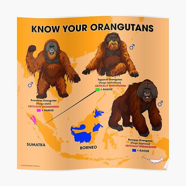 Know Your Orangutans Poster