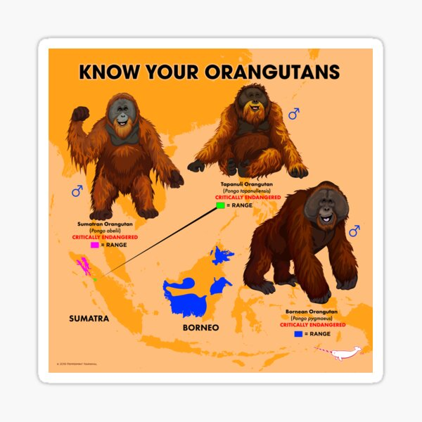 Know Your Orangutans Sticker