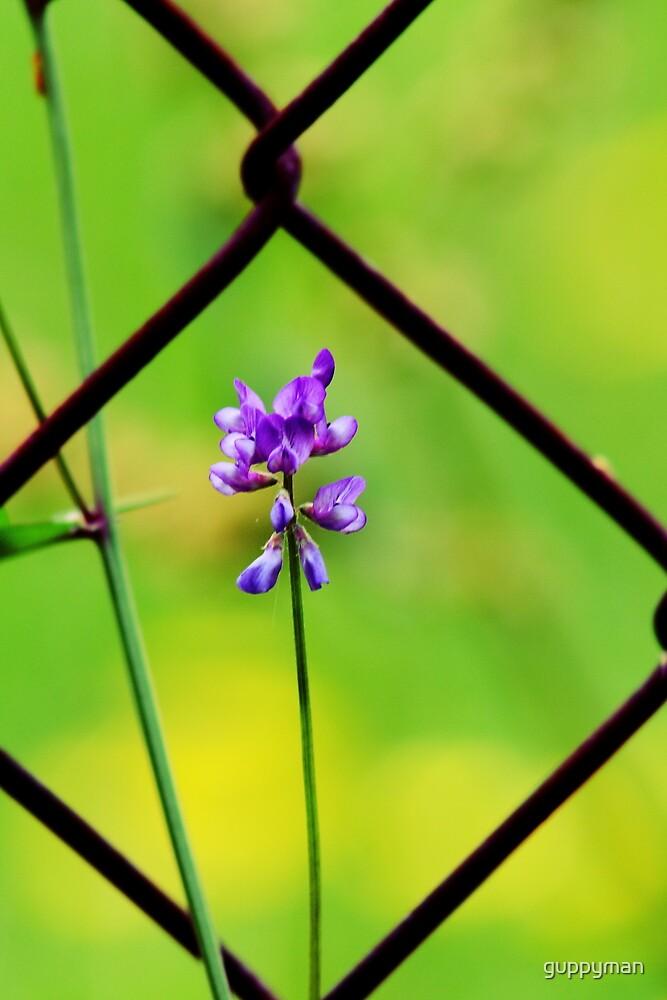 Purple Wildflower by guppyman