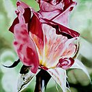 Rose Bud - oil painting of a rose bud by James  Knowles