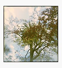 The City of Trees Photographic Print