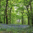 Swithland Woods by Mike Topley