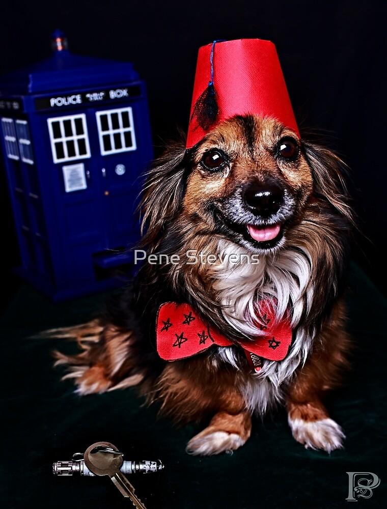 Dr Poo-dle by Pene Stevens