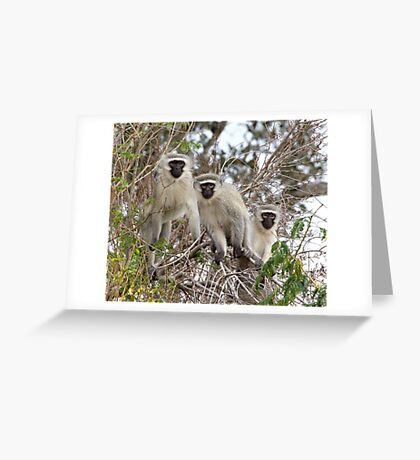The Three Monkeneers Greeting Card