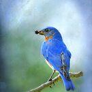 Beautiful Bluebird by Bonnie T.  Barry