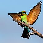 ''Rainbow Bee-eater'' by bowenite