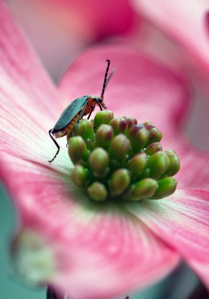 Hello, Mr. Bug by Natalie Parker