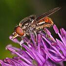 Pollination 21  by Gareth Jones